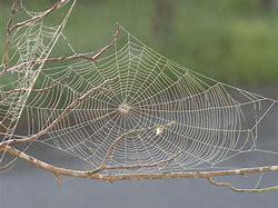 Pixabay spiderweb on branch